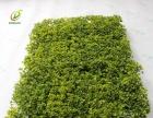 制作仿真植物墙便宜配材** 植物墙专用仿真草坪