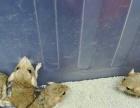 出售自己养松鼠龙猫刺猬沙鼠