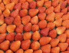 梅州精品水果零食店品牌榜