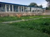 北京宠物寄养团结湖提供宠物寄养长期散养终身寄养托管