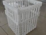 中兴种蛋筐 塑料42枚鸡蛋周转筐大种蛋筐生产厂家 塑料鸡蛋框