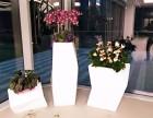 上海南汇花卉市场性价比高服务好