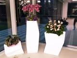 北京密云花卉市場性價比高服務好