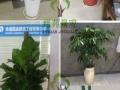南通专业绿植租售、园林绿化工程设计养护—价格较优
