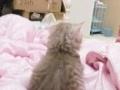 家庭式寄养小型犬和猫咪
