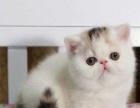 加菲幼猫找新家哟!