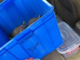 長期收購以下烏龜