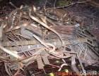 本厂大量回收废铜废铝废电线电缆等有色金属