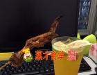 【奶茶冷饮甜品店加盟】免加盟手工甜品开店指导投资