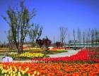 蚌埠花博园国庆大型菊展、3D梦幻灯光节对外招商