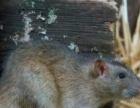 南充灭鼠,除虫,消毒服务认证