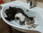 自己家猫生的,三只小公猫,健康可爱