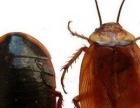 沧州清波消杀灭鼠,灭蟑螂,灭蚂蚁,灭虫公司