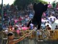 承接各种 动物商演 动物演出,马戏演出