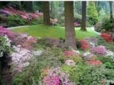 四川省哪里有卖得好的园林地被植物,园林地被植物到哪里批发配件