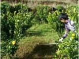 家用英达背负式割草机 锄草机 稻田施肥机