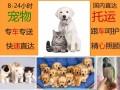 上海宠物包车租车 宠物长途搬家专车 宠物跟车托运