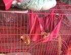 自家猫用的3层高档猫笼,半买半送,买一样送一堆