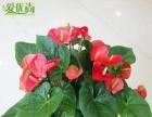 温馨花卉绿植租赁售卖服务中心