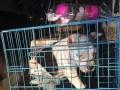温州顺宠达宠物托运承接全国各地宠物来回空运、汽运