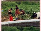 明康汇生态体验农场