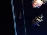 一条布隆迪,一条鹦鹉,一条印尼杂纹虎