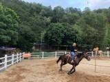 中山英格马术俱乐部,骑马钓鱼射箭的好地方