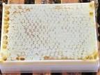 蜂巢蜜 新巢蜜 巢蜜 封盖蜜 天然蜂巢蜜500克