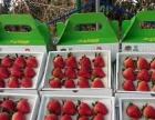 莓 好生活,从田峰草莓园采摘开始
