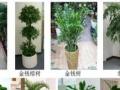 绿植租摆,绿植养护,各种鲜花,花篮,专业设计摆放