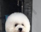 沈阳国家高级宠物美容师招生全国连锁加盟企业