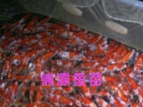 锦源鱼苗场出售各种淡水鱼苗
