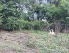 新村 土地 6000平米 农场。