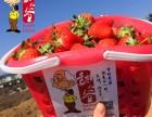 张家楼草莓采摘 胶南草莓采摘 黄岛区草莓采摘