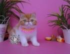 温州出售纯种加菲猫 包纯种健康 疫苗已做 颜色可挑选