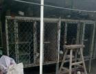 德牧,阿拉斯加等大型犬犬笼