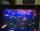 出售森森牌鱼缸1.2米