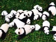 九寨沟黄龙熊猫乐园真纯玩三日游