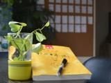 9月开学季,利用周末学习日语,留学 高考 考研 兴趣 工作