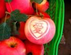 商丘 优质 苹果 水果采摘园 欢迎您!