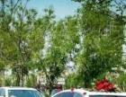 宝马5系白色私家车婚车租车纯洁的爱 头车、跟队价格低