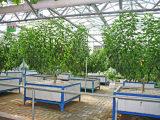 哪里有提供效果好的温室大棚,寿光温室大棚建设