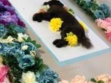 宠物殡葬设计 宠物墓地