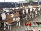 山西鑫河牧业常年供应肉牛犊育肥牛奶公牛基础母牛