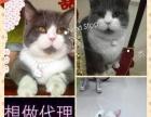 阿杰猫舍、专业繁殖各类宠物猫!常年对外批发、零售!