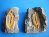洛阳吉利化石值几百万是真的吗到哪里交易