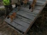 银川宠物寄养训练学校
