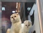 厦门猫友俱乐部出售全品种猫上门挑选猫咪的亲电话联系