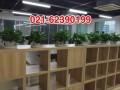 静安寺绿化养护室内植物租赁租摆静安区延安西路租摆植物租赁
