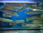 专业鱼缸搬家 安装 鱼缸维护 清洗